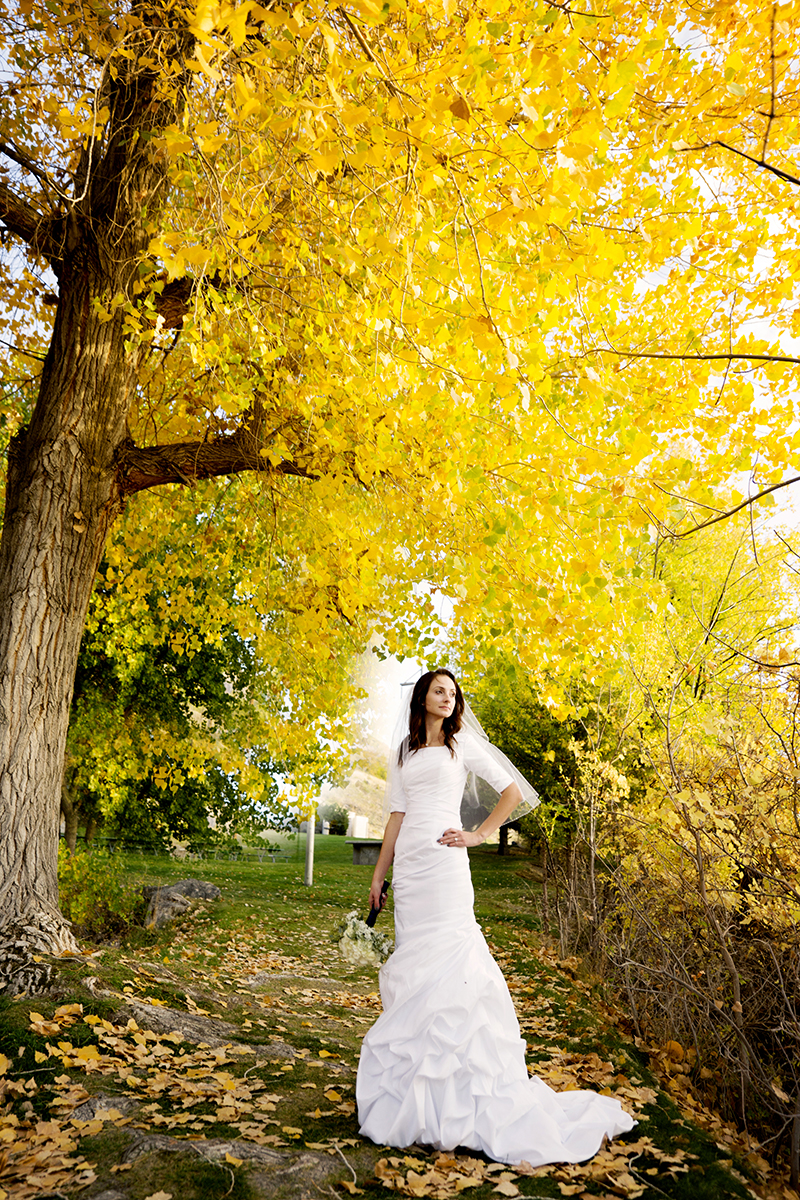 Utah Bridal Pictures fall colors yellow tree